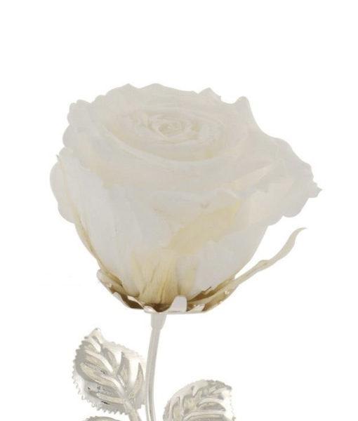 Rosa Stabilizzata Bianca - NonSoloCerimonie.it