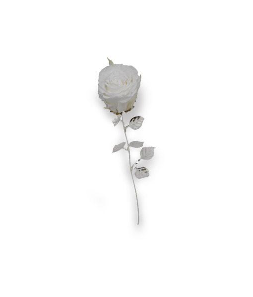 Rosa Naturale Stabilizzata Bianca 30 - NonSoloCerimonie.it