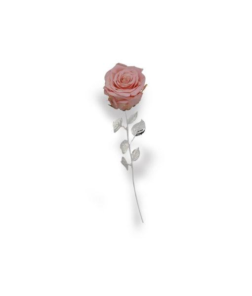 Rosa Naturale Stabilizzata Rosa 30 - NonSoloCerimonie.it